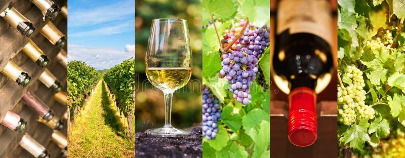 Enologia e collage panoramico della foto del vino, concetto del vino fotografie stock libere da diritti
