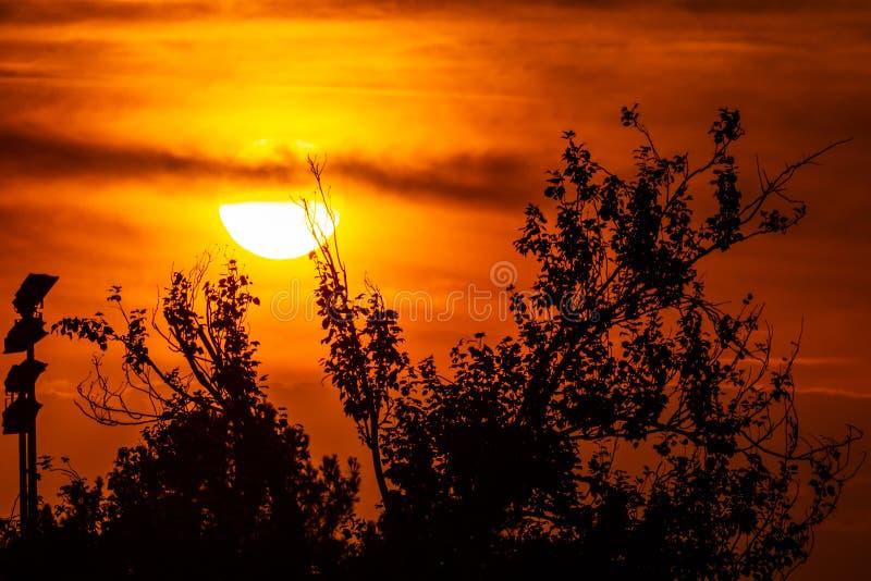 Enorm guld- sol för magisk solnedgång över en orange himmel och några trädfilialer i förgrunden zoom av solen royaltyfri foto