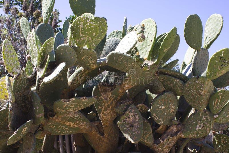 Enorm kaktus med texter arkivfoton
