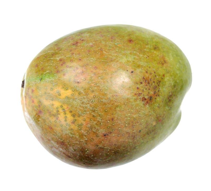 Enorm mango royaltyfria bilder