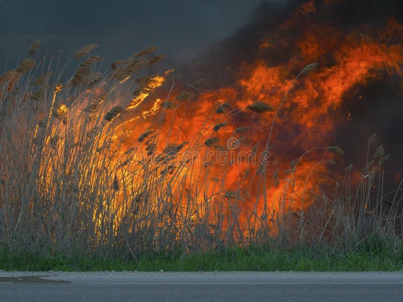 Enorm massiv brand i den öppna luften royaltyfri bild