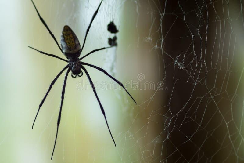 Enorm spindel för svart änka royaltyfri fotografi