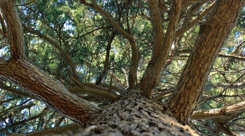 enorm trädbottensikt royaltyfria foton
