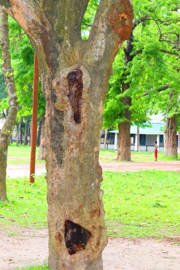 Enorma tr?dstammar i f?rdjupning det stora tr?det rotar, och solstr?len i en gr?n forestSpring ?ng rotar av ett stort tr?d med ny royaltyfria foton