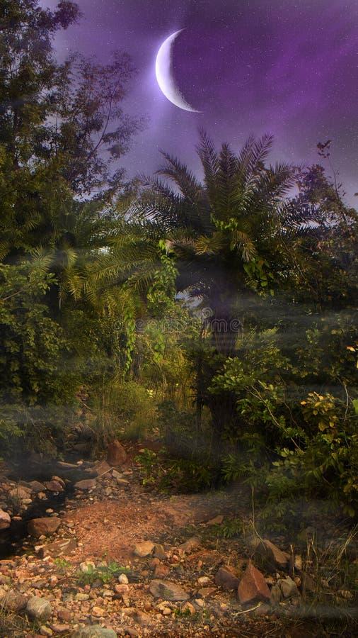 Enorma växande månehängningar över djungel royaltyfri fotografi