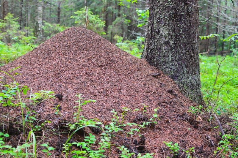 Enormer Ameisenhügel im Wald das große Haus für Ameisen Leben von Ameisen stockfotos