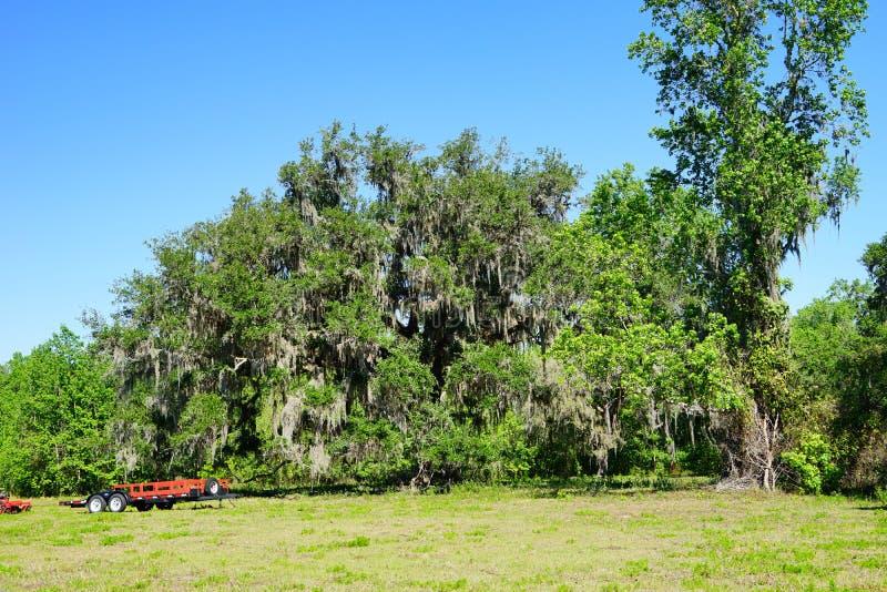 Download Enormer Baum in Florida stockfoto. Bild von grün, block - 90237416