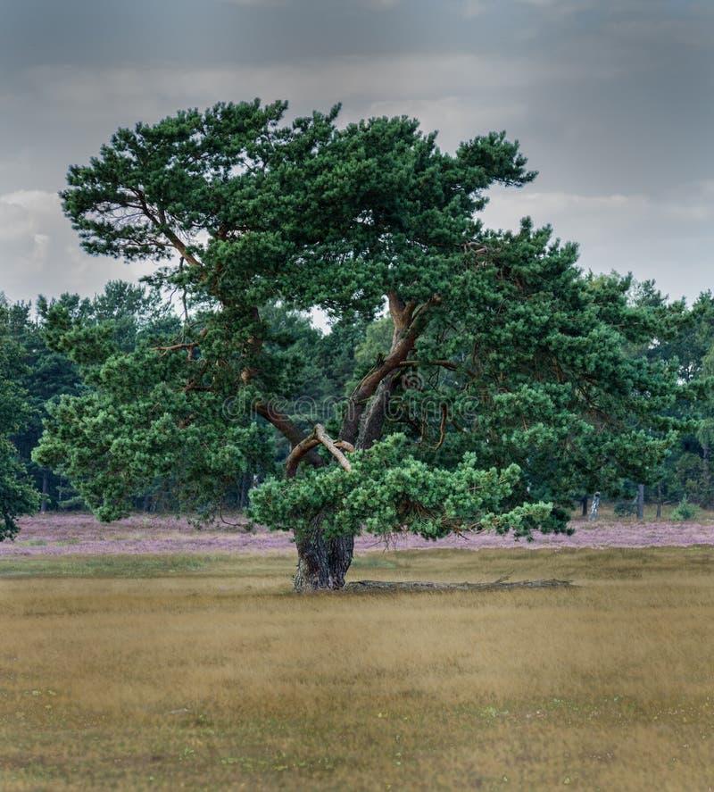 Enormer Baum und drastischer Himmel stockfoto