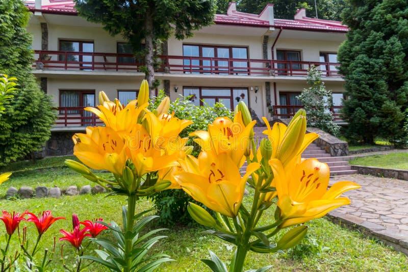 Enormes blühen gelbe und rote Lilien gegen den Hintergrund des Hotelkomplexes stockfotos