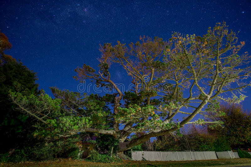 Enormous tree in front of hut under stars stock image