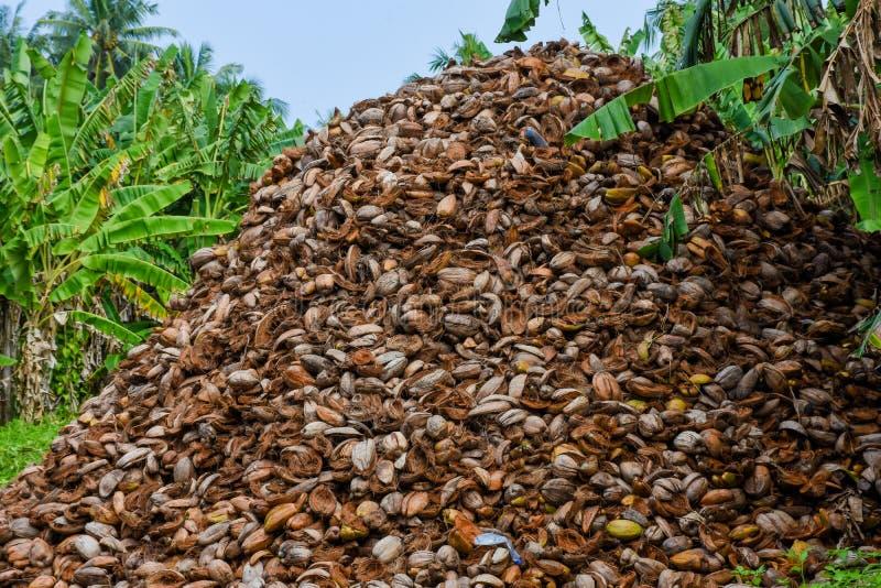 Enormt berg av skal för kokosnöt` s arkivfoton