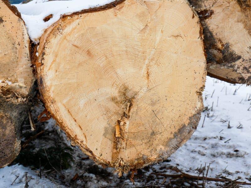 Enormt sörja journaler nära skog stänger sig upp på vintertid arkivbilder