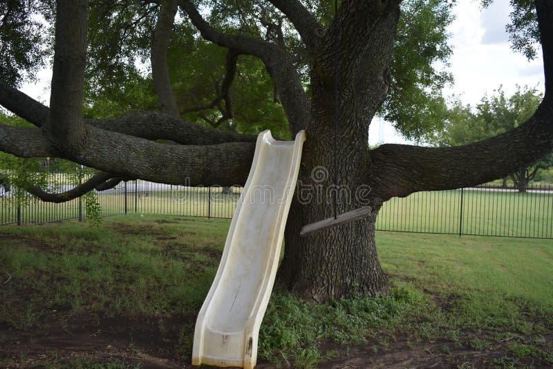 Enormt träd med glidbanan arkivbild