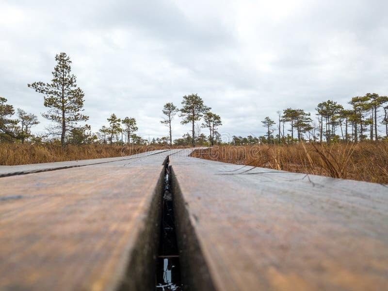 Enormt träsk i Lettland royaltyfri bild