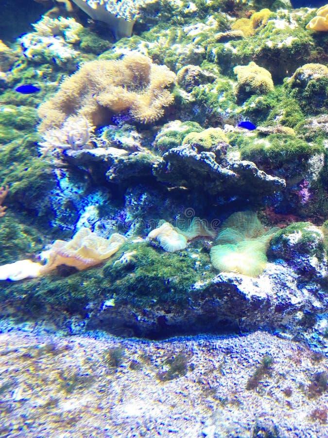 Enoshima海水族馆 免版税库存图片