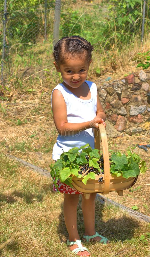 Is this enough?. Pretty little girl with full basket of just picked blackcurrants in a rural setting royalty free stock photography