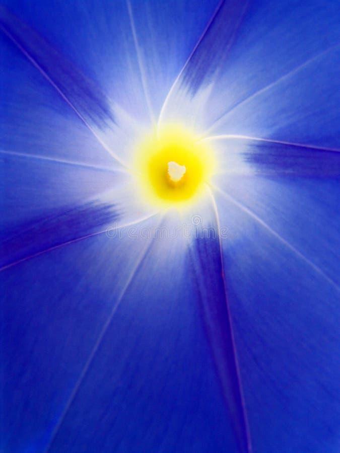 Enredadera azul. imagenes de archivo