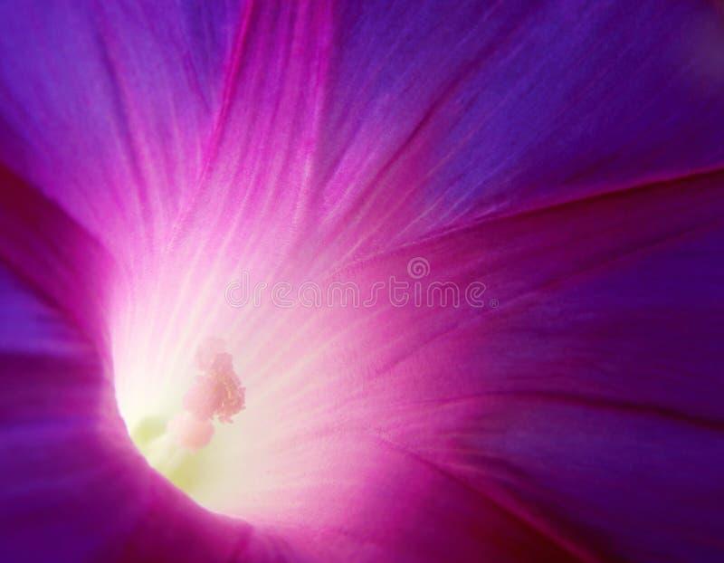 Enredadera violeta fotografía de archivo