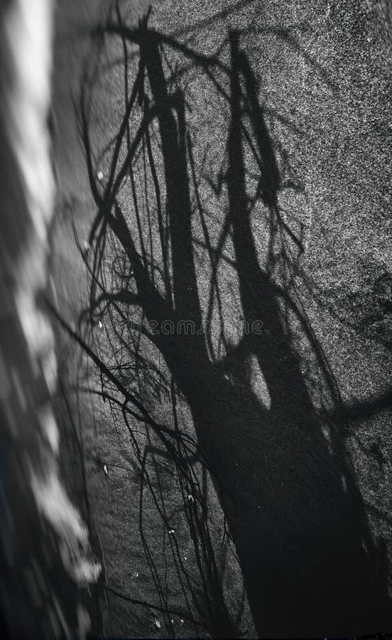 Enrede la sombra de un árbol para un fondo de Halloween imagen de archivo