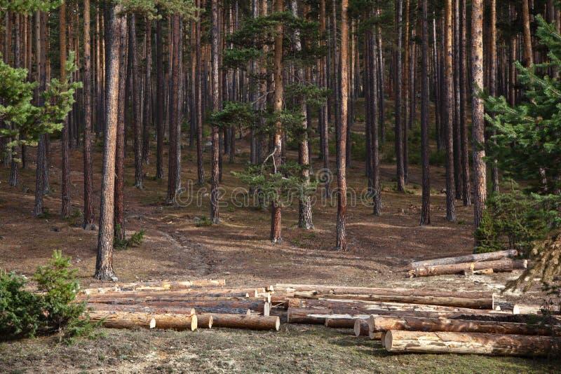 Enregistrement de forêt photos stock