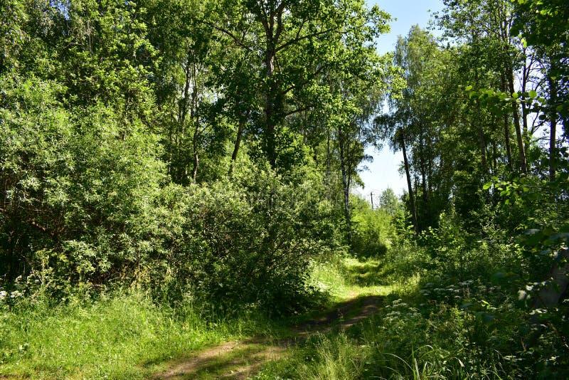 Enrolamento obscuro da fuga do trajeto da floresta verde luxúria densa na perspectiva imagens de stock royalty free