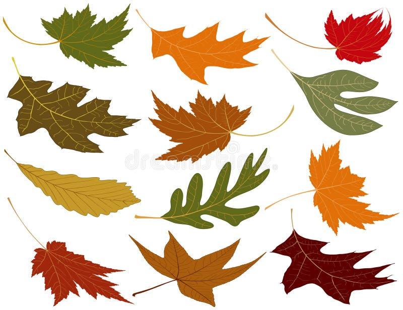 Enrole as folhas fundidas da queda ilustração royalty free