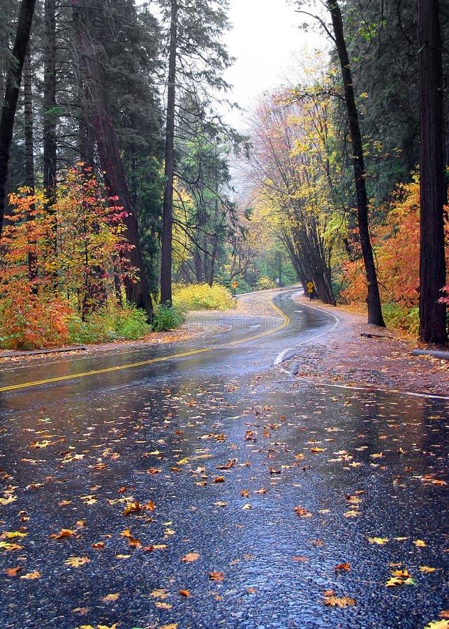 enroulement de route d'automne de couleur images stock