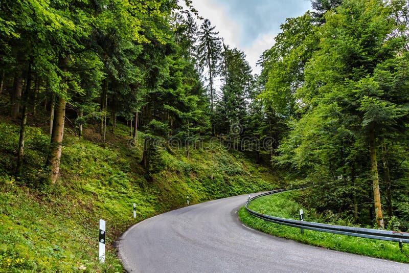 Enroulement goudronné de route par le vert luxuriant countryside_1 photos stock
