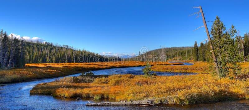 Enroulement la rivière Yellowstone en automne photo libre de droits