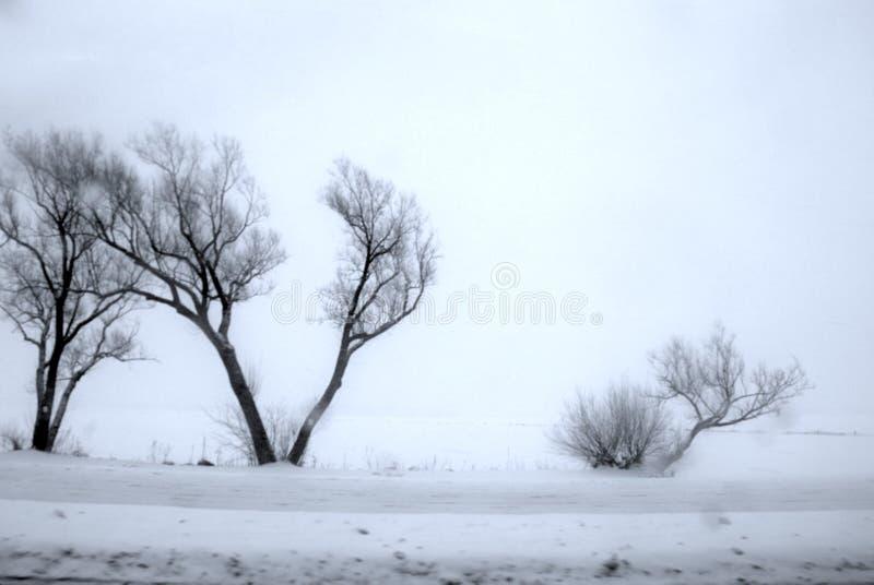 Enroulez les arbres nus balayés et frottez la brosse entourée par le champ neigeux en ciel noir, gris, bleu de froid glacial image stock