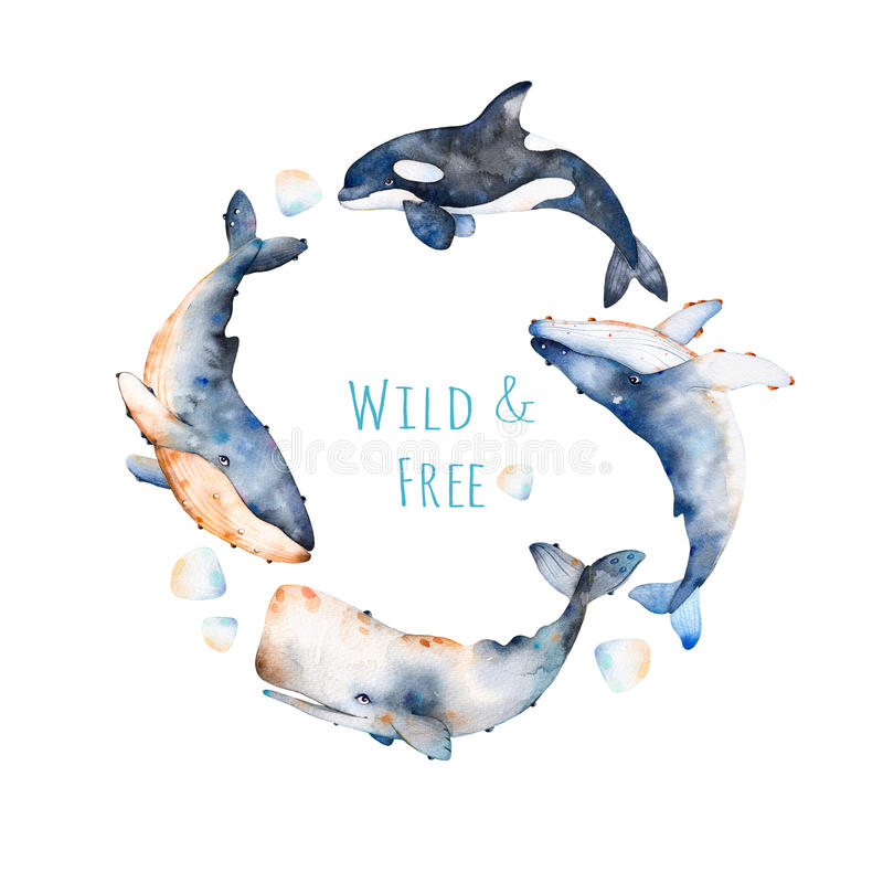 Enrruelle en el fondo blanco con la ballena azul, la ballena de aleta y la ballena de esperma ilustración del vector