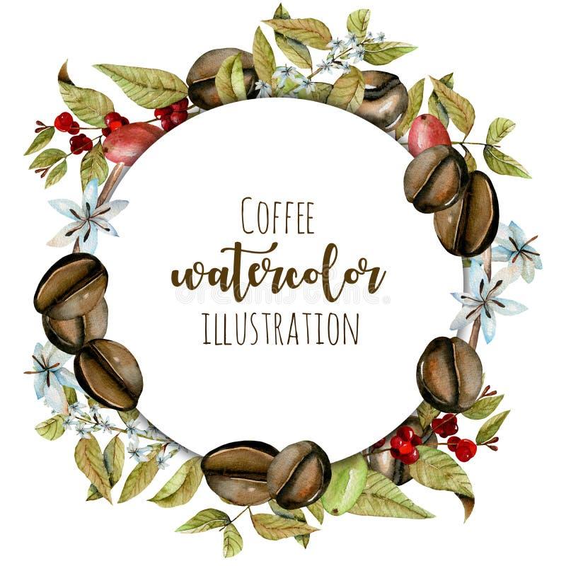Enrruelle, marco del círculo de ramas del café de la acuarela, las flores y las habas en diversas etapas de la maduración stock de ilustración