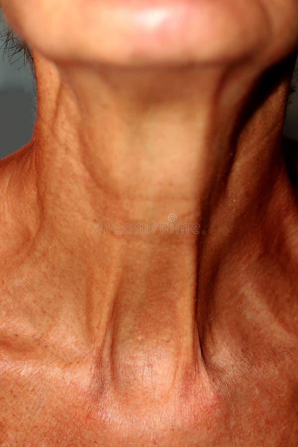 Enrugamentos no pescoço Pele mole no pescoço fotos de stock