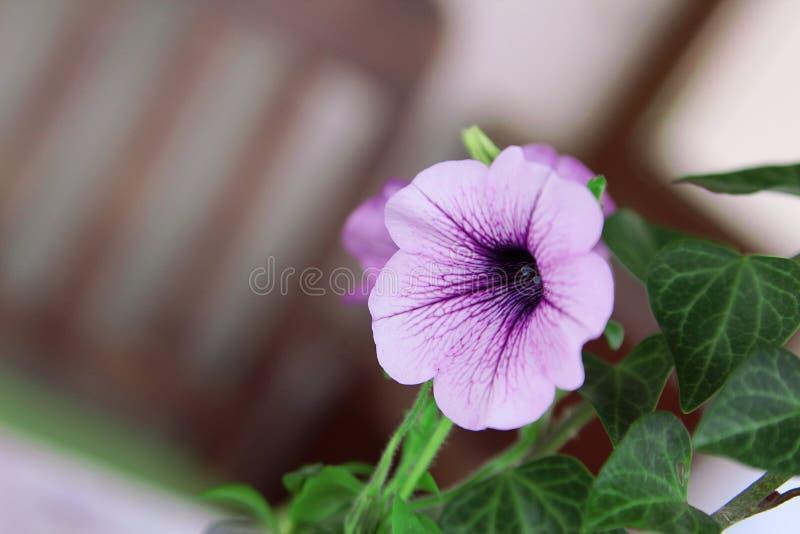 ensalada clasificada colorida hermosa en la placa blanca fotografía de archivo libre de regalías