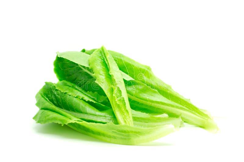 Ensalada de Cos Lettuce. fotografía de archivo libre de regalías