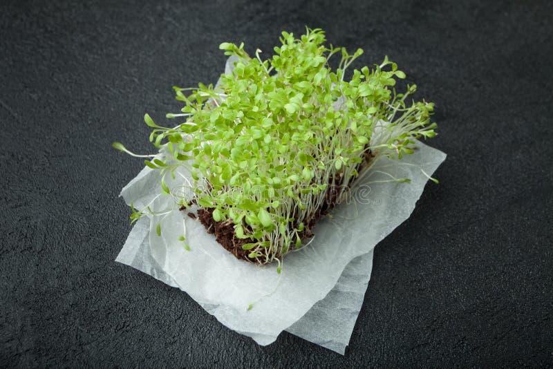 Ensalada micro-verde fresca con las raíces en el documento sobre un fondo negro Estimulante de la inmunidad y prolongación de la  imagen de archivo libre de regalías
