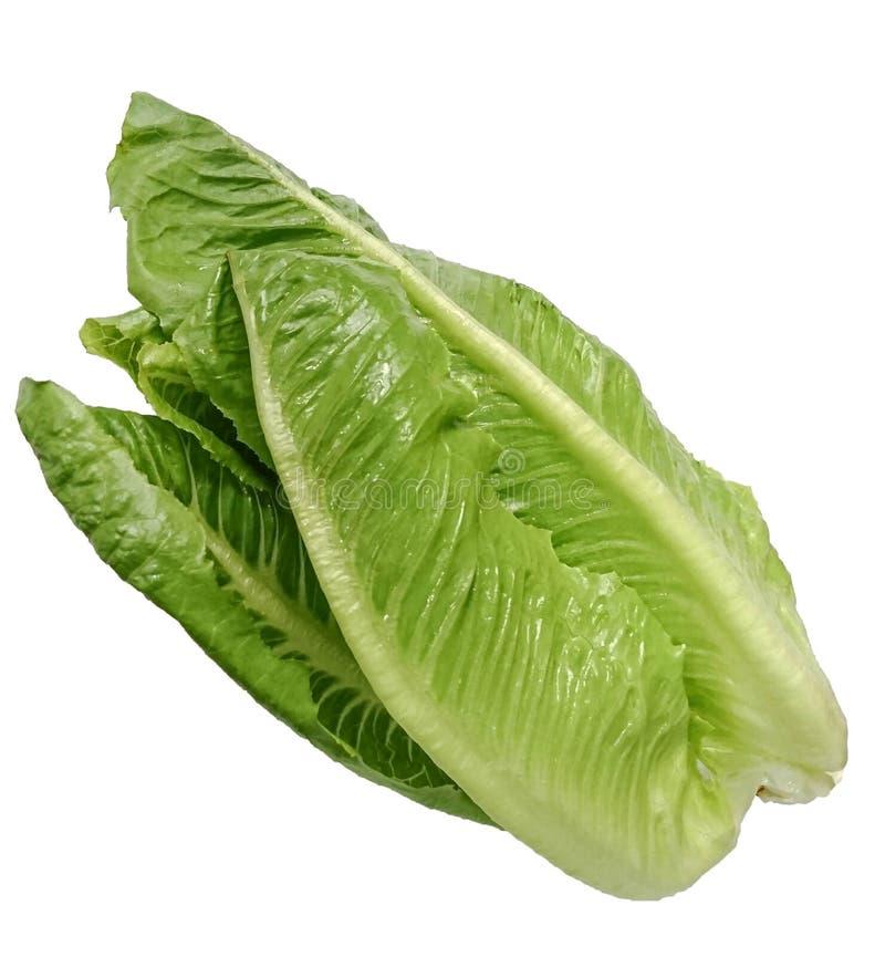ensalada vegetal verde fresca de Cos Lettuce aislada en el fondo blanco imagen de archivo libre de regalías