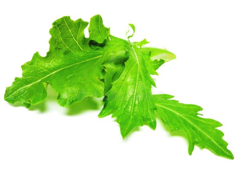 Ensalada, verde imagen de archivo