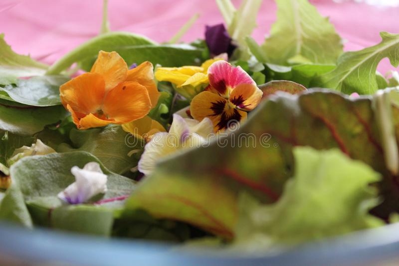 Ensalada verde con las flores amarillas y violetas fotografía de archivo