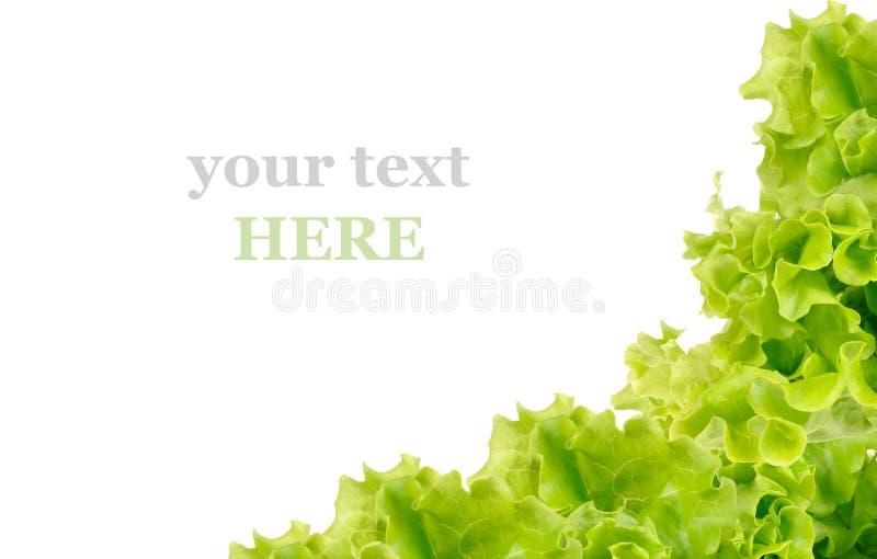 Ensalada verde fresca imagen de archivo libre de regalías