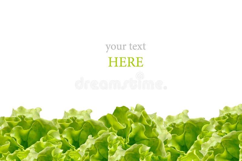 Ensalada verde fresca aislada en el fondo blanco imágenes de archivo libres de regalías