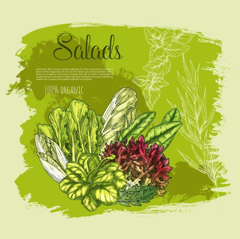 Ensaladas del cartel del vector o verduras frondosas de la lechuga libre illustration