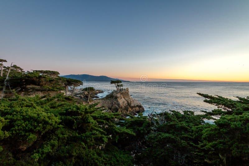 Ensam cypressträdsikt på solnedgången längs berömt 17 mil drev - Monterey, Kalifornien, USA royaltyfri bild