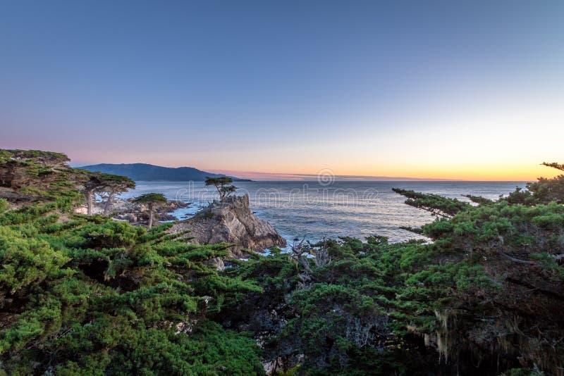 Ensam cypressträdsikt på solnedgången längs berömt 17 mil drev - Monterey, Kalifornien, USA royaltyfria foton