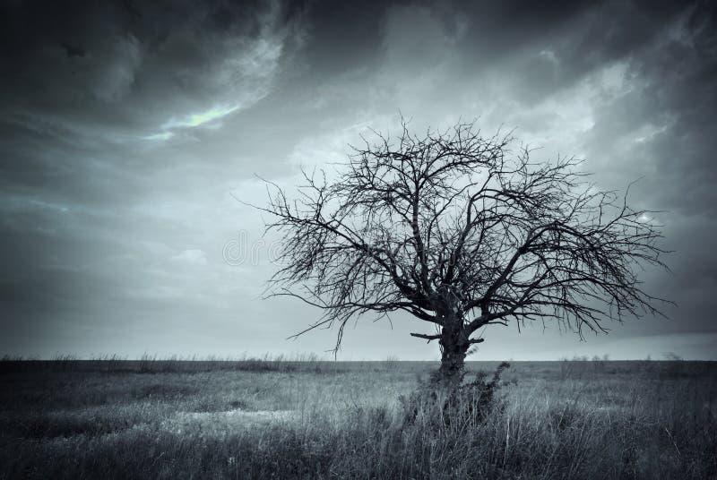 Ensam död tree. arkivbilder