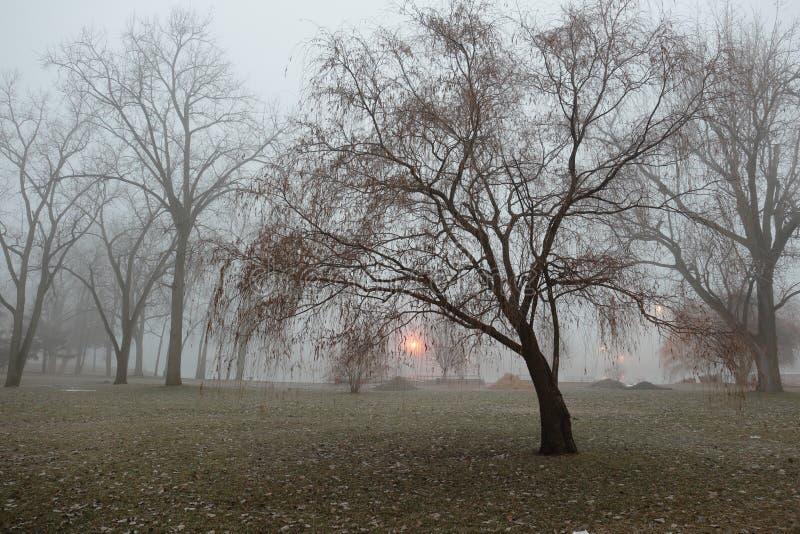 ensam en tree royaltyfri foto