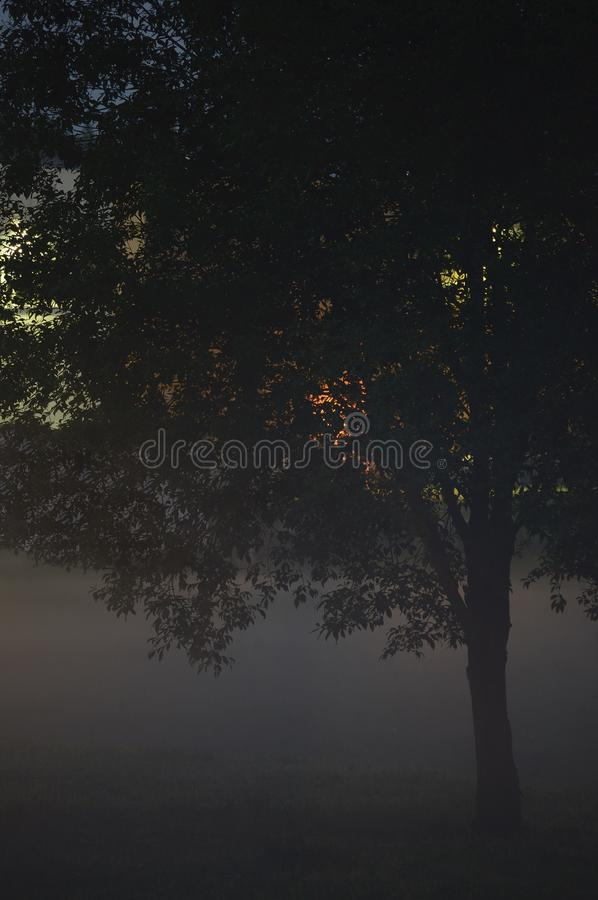 Ensam enkel Closeup för trädfilialer, dimmig skymningmist, Misty Silhouette In Low Fog skymning, vertikal ljus utomhus- bakgrunds fotografering för bildbyråer