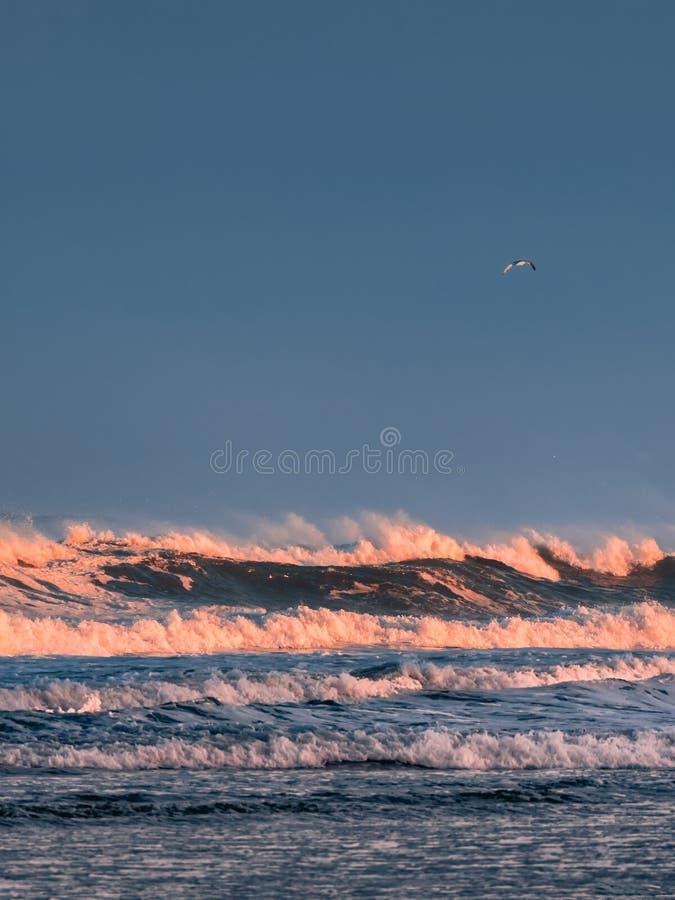 Ensam fågel som flyger över havet och de stora vågorna på soluppgång arkivfoton