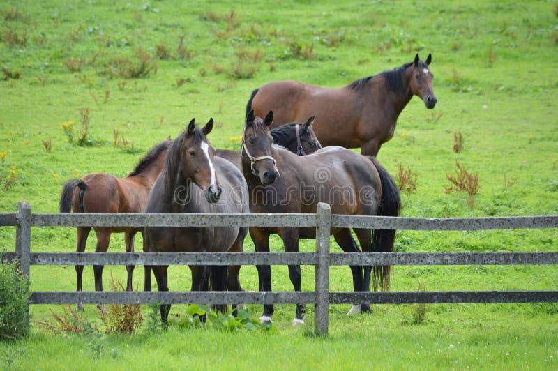 Ensam för häst begrundande ganska arkivbild
