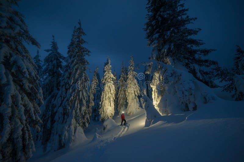 Ensam fotvandrare i vinterskymningskog arkivfoton